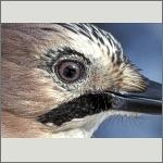 Bild 36 zum Bildarchiv Augen