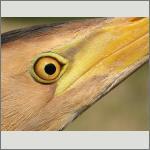 Bild 23 zum Bildarchiv Augen