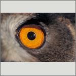 Bild 25 zum Bildarchiv Augen