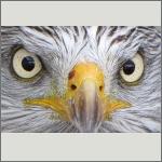 Bild 18 zum Bildarchiv Augen