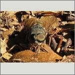 Bild 21 zum Bildarchiv Augen