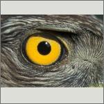 Bild 14 zum Bildarchiv Augen