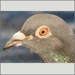 Bild 10 zum Bildarchiv Augen