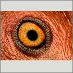 Bild 8 zum Bildarchiv Augen