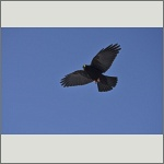 Bild 8 zum Bildarchiv Vögel
