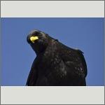 Bild 12 zum Bildarchiv Vögel