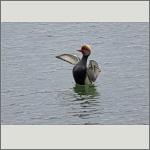 Bild 7 zum Bildarchiv Vögel