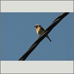 Bild 4 zum Bildarchiv Vögel