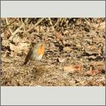 Bild 3 zum Bildarchiv Vögel
