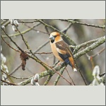 Bild 2 zum Bildarchiv Vögel