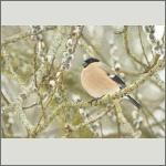 Bild 5 zum Bildarchiv Vögel