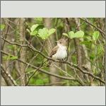 Bild 6 zum Bildarchiv Vögel
