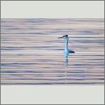 Bild 9 zum Bildarchiv Vögel