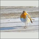 Bild 1 zum Bildarchiv Vögel