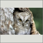Bild 53 zum Bildarchiv Vögel