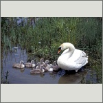 Bild 58 zum Bildarchiv Vögel