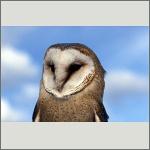 Bild 60 zum Bildarchiv Vögel