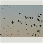 Bild 61 zum Bildarchiv Vögel