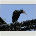 Bild 63 zum Bildarchiv Vögel