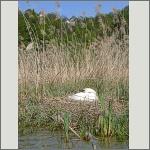 Bild 65 zum Bildarchiv Vögel