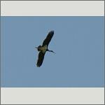 Bild 29 zum Bildarchiv Vögel