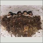 Bild 28 zum Bildarchiv Vögel