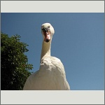 Bild 25 zum Bildarchiv Vögel