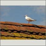 Bild 26 zum Bildarchiv Vögel