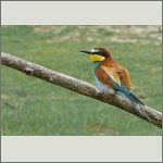 Bild 18 zum Bildarchiv Vögel