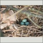 Bild 21 zum Bildarchiv Vögel