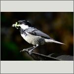 Bild 16 zum Bildarchiv Vögel