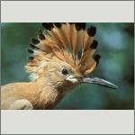 Bild 34 zum Bildarchiv Vögel