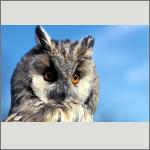 Bild 35 zum Bildarchiv Vögel