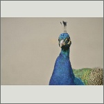 Bild 14 zum Bildarchiv Vögel