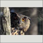 Bild 41 zum Bildarchiv Vögel