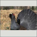 Bild 43 zum Bildarchiv Vögel
