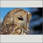 Bild 47 zum Bildarchiv Vögel