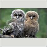 Bild 50 zum Bildarchiv Vögel