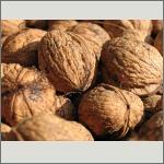 Bild 30 zum Bildarchiv Früchte/Samen