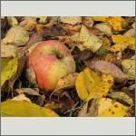 Bild 25 zum Bildarchiv Früchte/Samen