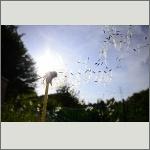 Bild 19 zum Bildarchiv Früchte/Samen