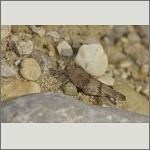 Bild 38 zum Bildarchiv Sonstige Insekten