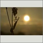 Bild 32 zum Bildarchiv Sonstige Insekten