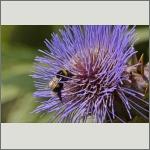 Bild 29 zum Bildarchiv Sonstige Insekten