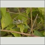 Bild 22 zum Bildarchiv Sonstige Insekten