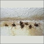Bild 25 zum Bildarchiv Sonstige Insekten