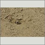 Bild 20 zum Bildarchiv Sonstige Insekten