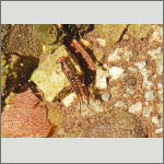 Bild 5 zum Bildarchiv Sonstige Insekten