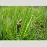 Bild 93 zum Bildarchiv Sonstige Insekten
