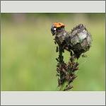 Bild 22 zum Bildarchiv Käfer
